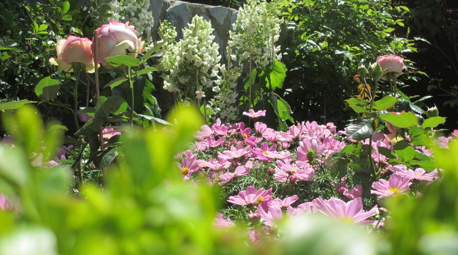 Pflanzarbeiten Garten Und Landschaftsbau Christoph Korner